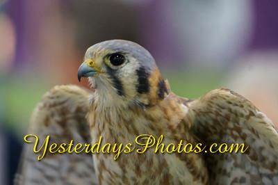 YesterdaysPhotos com-_DSC7637
