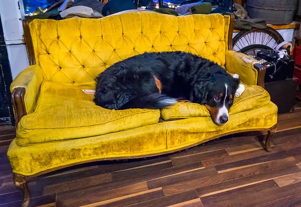 Store mascot, Bentley, at the William Carlton Workshop