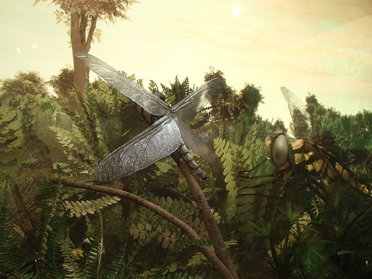 This is how big dragonflies used to be
