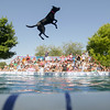 Record-Eagle/Keith King<br /> Storie, a black lab owned by J.D. McKnight and Ronalee McKnight, of Ohio, flies through the air prior to landing in a pool during the National Cherry Festival Ultimate Air Dogs competition.