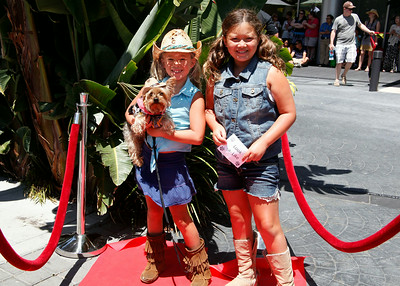 2014 Poodles on Parade - Red Carpet Photos