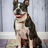 Friendly Giants - Bark & Fitz Kanata - May 17 2014