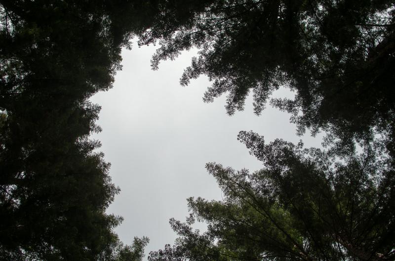 2014-06-21_9531