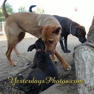YesterdaysPhotos com_DSC1903