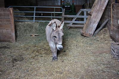 George the donkey