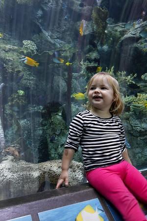 2015-04-26 Aquarium of the Pacific