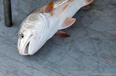 ACGFA Kingfish Day 1-0006.jpg