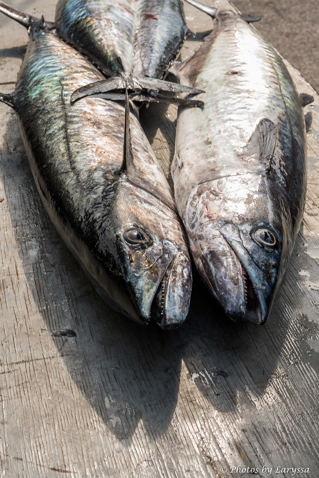 ACGFA Kingfish Day 1-0073.jpg