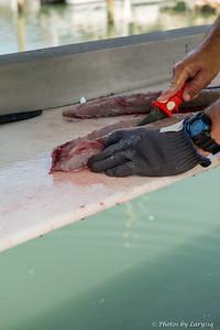 ACGFA Kingfish Day 1-0019.jpg