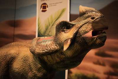 Dinosaur Discovery: Lost Creatures of the Cretaceous, Queensland Museum, Saturday 30 May 2015. Pics by Des Thureson - http://disci.smugmug.com