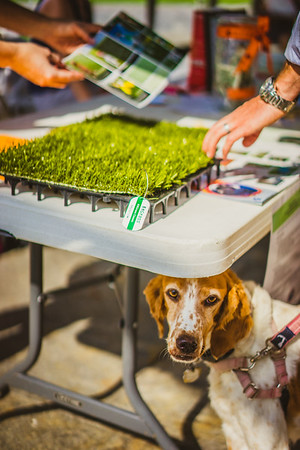 New Turf Samples for Gassy Dog Park
