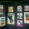 Dog Picture Gallery