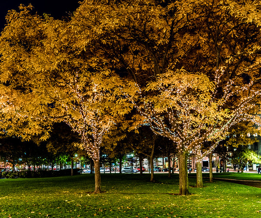 Traditional white lights will be wrapped around park trees