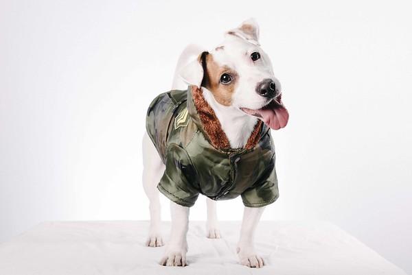 Happy Dog Day spa