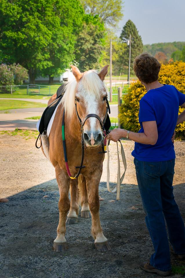 Pegasus Farm 2015
