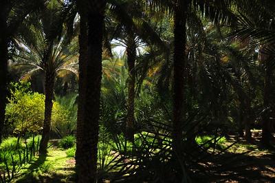 Oasis Al Ain