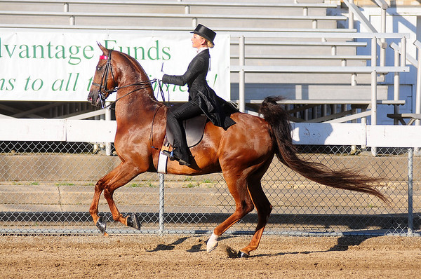 2015-07-30 Dayton Horse show