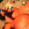 Brookfield Pumpkin Party_20151024_007