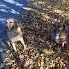 Poly & Jack on a Sunday walk.