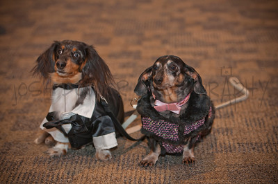 2015 Fur Ball | Peninsula SPCA | 025