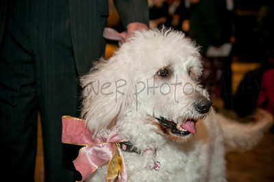 2015 Fur Ball | Peninsula SPCA | 024