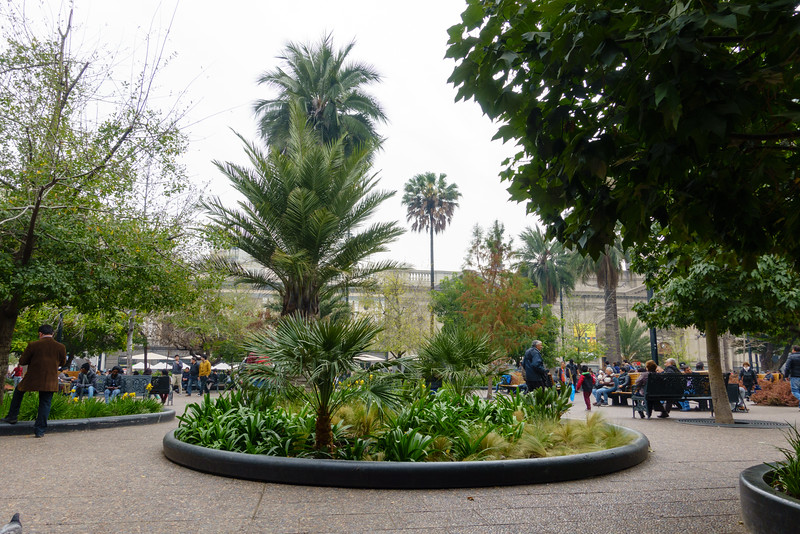 Plaza de Armas. These are Chilean palm trees - you know that because they have smooth trunks. The ones with rough trunks are Brazilian palms.