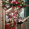 Inverted tree at Mad Hatter Restaurant