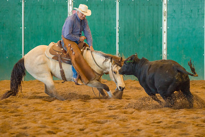 2016 Arizona Cutting Horse Association