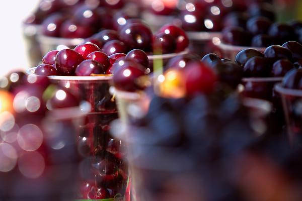 Spec Cherry Fest