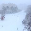 Snowzilla#1 2016