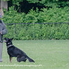 K9 Regional Trials - Day 2