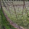 Wine Down Wednesday<br /> Naches Heights & Wilridge Vineyards