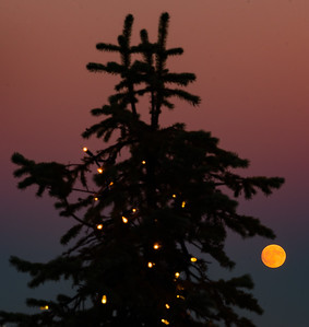Trimming the tree with the Supermoon
