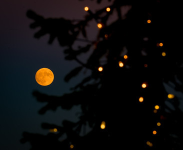 Supermoon Amid Tree Lights