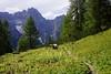 Vie ferrate Rotwandsteig und Alpinisteig