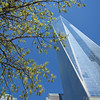 911 Memorial Oak and Tower April 24, 2016