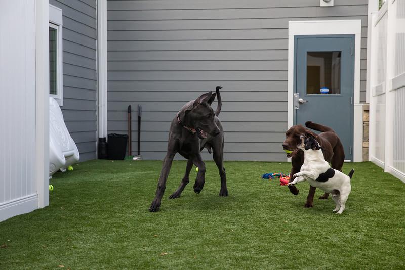 City Line Veterinary Center Open House