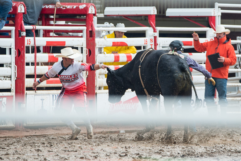 Calgary Stampede Rodeo 9812