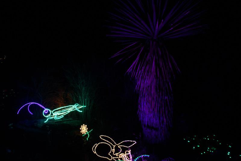 20161221-24 Albuquerque River of Lights 039