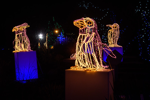 20161221-24 Albuquerque River of Lights 031