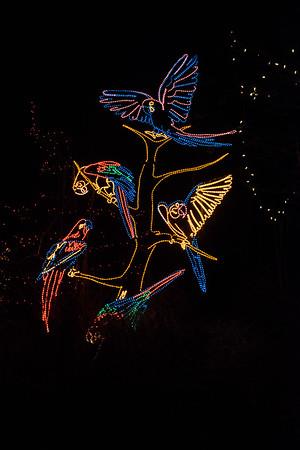 20161221-24 Albuquerque River of Lights 014