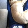 Sleeping on Grampa