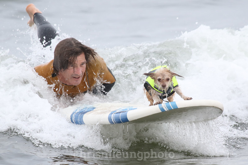 8/5/17: Boo rides in during the 2017 World Dog Surfing Championships at Pacifica State Beach in Pacifica, Ca by Chris M. Leung