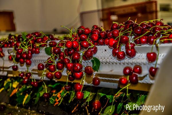 Cherry17 (4 of 166)