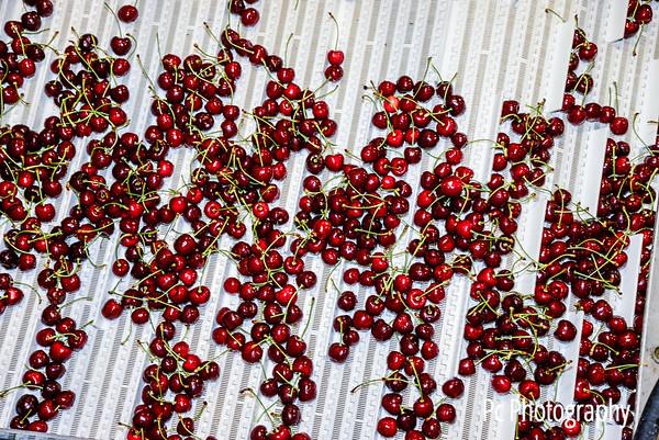 Cherry17 (2 of 166)