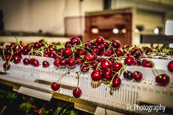 Cherry17 (11 of 166)