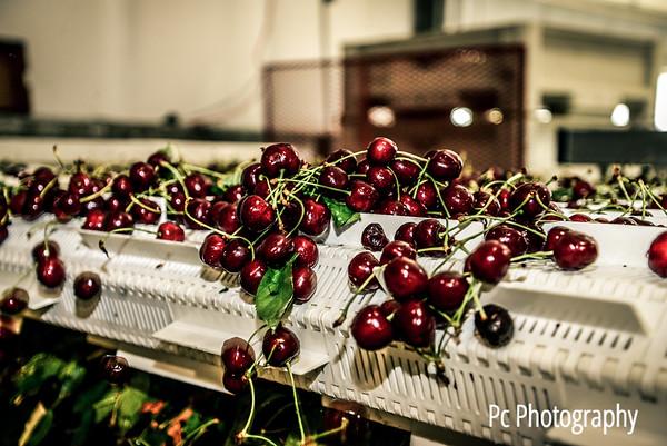 Cherry17 (12 of 166)