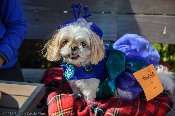 shelley-castle-photography-howl-a-ween-4