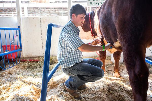 NWMI Fair Steer
