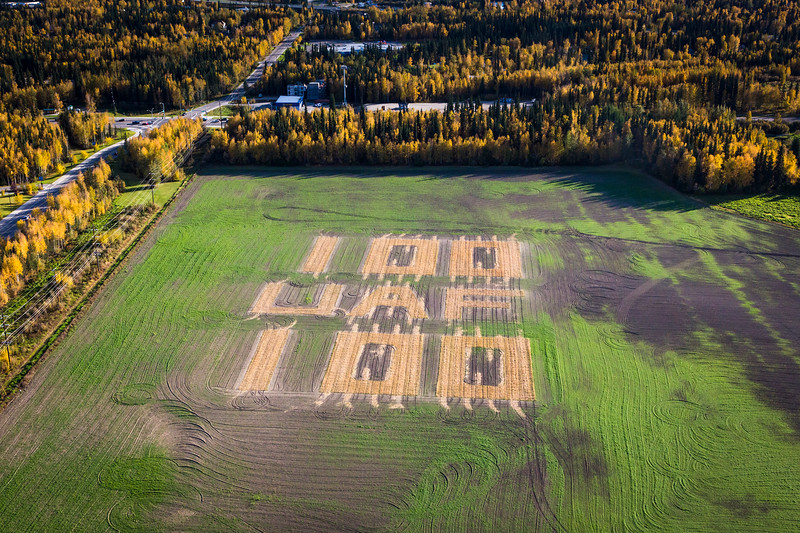 In honor of UAF's 100th anniversary, the Fairbanks Experiment Farm created a barley display at te field.